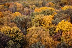 惊人的五颜六色的秋天秋天森林鸟瞰图  图库摄影