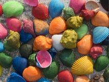 惊人的五颜六色的贝壳 库存图片