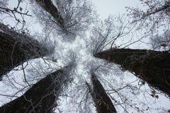 惊人的冬天 库存照片