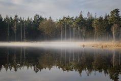 惊人的反射在杉木有报道表面的薄雾的森林池塘 免版税库存照片