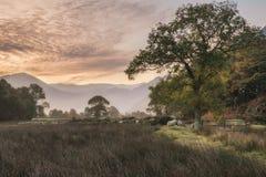 惊人的在乡下的冬天有雾的日出在Crummock W附近 免版税库存照片