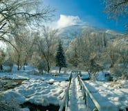 惊人的多雪的冬天在12月的哈萨克斯坦 图库摄影