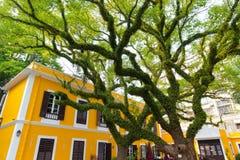 惊人的大绿色树 库存照片