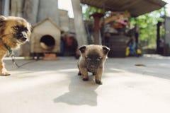 惊人的小狗 免版税库存照片