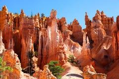 惊人的岩层和美国黄松在布莱斯峡谷国家公园 免版税库存照片