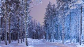 惊人的平静的冬天森林风景在Suomi北欧人地区 库存图片