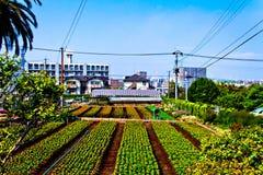惊人的庭院在大分日本 免版税库存照片