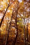 惊人的形状结构树 免版税库存图片