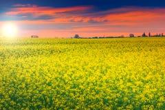 惊人的日落和油菜调遣,特兰西瓦尼亚,罗马尼亚,欧洲 库存照片