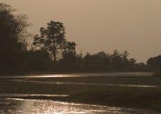 惊人的日落在密林, Bardia,尼泊尔 免版税库存图片