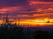 惊人的日落在森林里 免版税库存图片