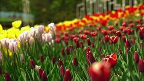 惊人的春天风景 股票录像