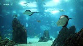 惊人的有许多鱼的看法水下的水族馆 股票视频