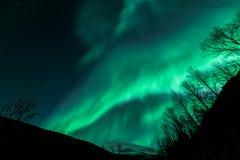 惊人的极光Borealis在北部挪威特罗姆瑟 免版税库存照片