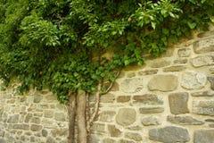 惊人的树在罗马尼亚 免版税库存照片