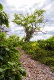 惊人的树在藤被盖 库存图片