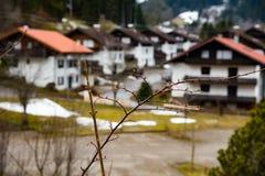 惊人的树枝在德国 免版税库存照片