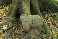 惊人的树根看起来象蠕虫Kew Mae平底锅自然痕迹,土井Inthanon自然公园,清迈,泰国 免版税图库摄影