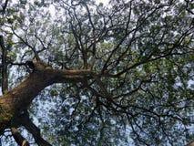 惊人的树 免版税库存图片