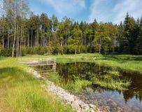 惊人的森林池塘用透明的水 免版税库存图片