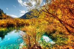惊人的池塘用在秋天森林中的天蓝色的透明的水 免版税图库摄影