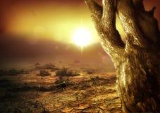 惊人的沙漠场面 免版税库存图片