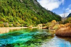 惊人的河用在常青森林中的天蓝色的水晶水 库存照片