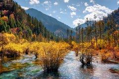 惊人的河用在秋天森林和山中的水晶水 免版税库存照片
