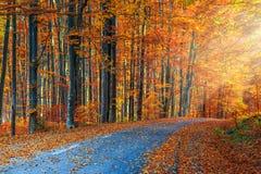 惊人的浪漫路在秋天五颜六色的森林里 库存图片