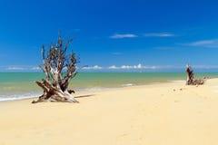 惊人的海滩在泰国由海啸毁坏了 库存照片