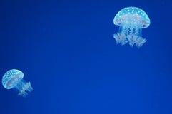 惊人的海洋 免版税库存图片