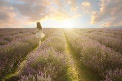 惊人的淡紫色领域风景 免版税库存图片