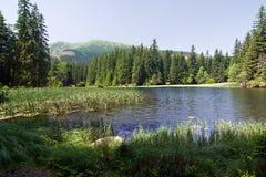 惊人的湖山夏天 免版税库存图片