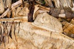 惊人的湿干香蕉留下艺术性和自然构成 库存照片