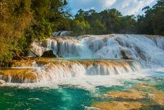 惊人的瀑布的看法与绿色树围拢的绿松石水池的 阿瓜Azul,恰帕斯州,帕伦克,墨西哥 图库摄影