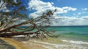 惊人的热带假日 股票视频