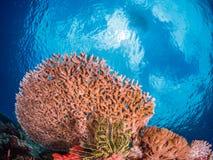 惊人的热带珊瑚礁 库存照片
