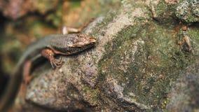 惊人的特写镜头蜥蜴照片 库存照片