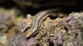 惊人的特写镜头蜥蜴照片 免版税图库摄影
