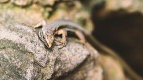 惊人的特写镜头蜥蜴照片 图库摄影