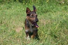 惊人的狗 免版税库存图片