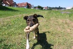 惊人的狗 免版税库存照片