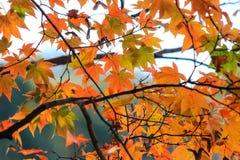 惊人的秋天在日本 图库摄影