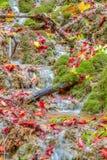 惊人的秋天森林小河 免版税库存照片