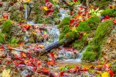 惊人的秋天森林小河 免版税图库摄影