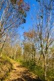 惊人的秋天田园诗干燥树叶子改变黄色 免版税库存图片