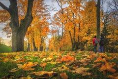 惊人的秋天 秋叶在五颜六色的公园 蓝色多云秋天域横向偏僻的天空结构树黄色 在胡同的黄色和红色树 免版税库存图片