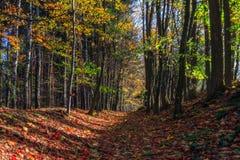 惊人的秋天Forrest。 库存图片