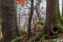 惊人的秋天Forrest。 免版税库存图片
