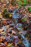 惊人的秋天Forrest。 免版税图库摄影